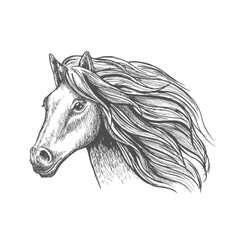 Mare or stallion young horse head sketch with mane vector