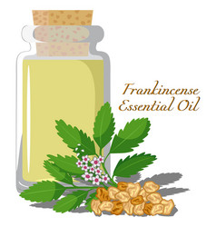 Frankincense essential oil vector