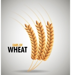 Ears of wheat design vector