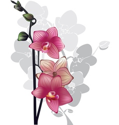 Branch of pink orchids vector