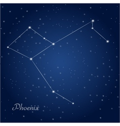 Phoenix constellation vector