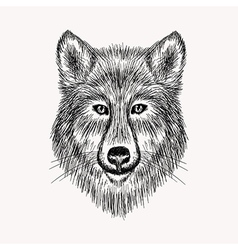 Sketch realistic face Wolf Hand drawn in Doodle vector image vector image