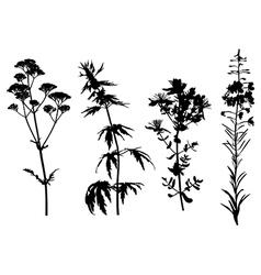 Medical herbs set vector