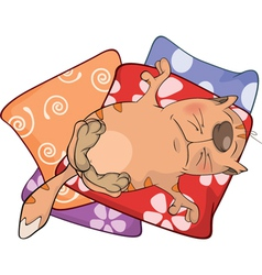 Cat on pillows Cartoon vector image