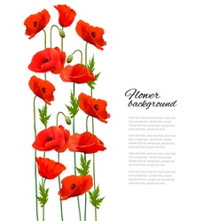 Flower background with poppies vector