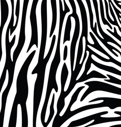 Abstract skin texture of zebra vector