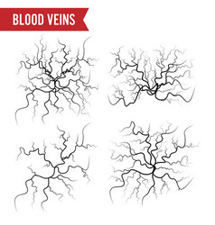 Human blood veins blood arteries isolated vector