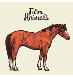 Isolated one brown horse vector