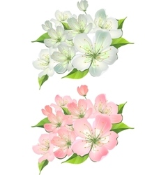 Blossoming branch of apple tree vector