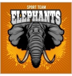 Elephants - sport club team symbol Safari hunt vector image