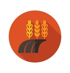 Ears of wheat barley or rye on field flat icon vector