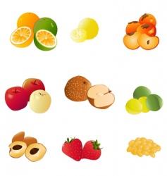 japanese fruit vector image