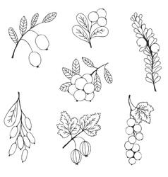 Berries sketch seamless pattern vector image vector image