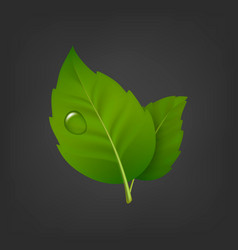 background with green leaf pair and drop of vector image