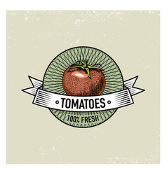 tomatoes vintage set of labels emblems or logo vector image