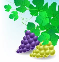 Corner decoration with grapes vector