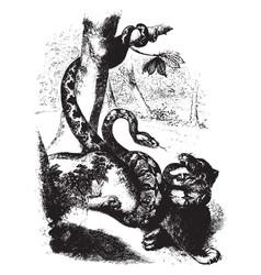 Boa constricting a jaguar vintage vector