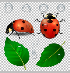 Close-up realistic ladybugs water drops vector