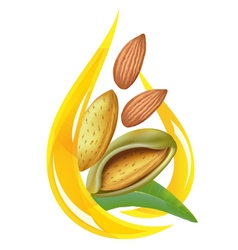 Almond oil vector