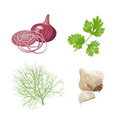 Onion garlic parsley dill fresh vegetables vector