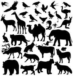 image animals vector image