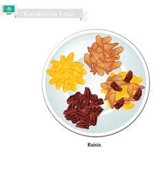 Raisins or dried grape the popular snack vector