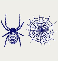 Spider and cobweb vector