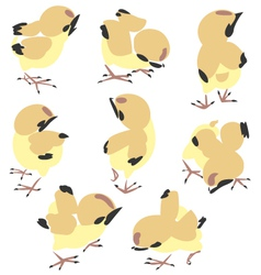 chick vector image