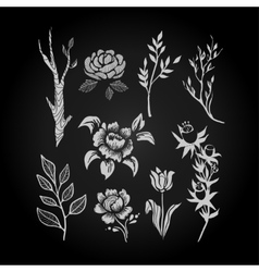 Fantasy hand drawn flower and plant set vector