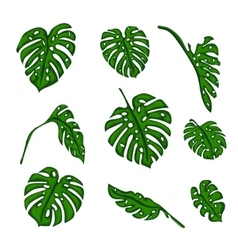 A set of botanical tropical fern leaves to create vector
