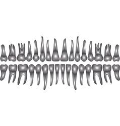3d dentition vector image
