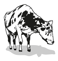 Spotted milk cow vector