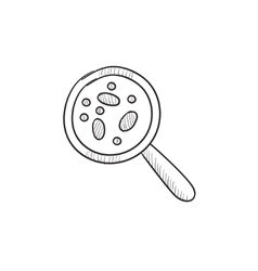 Microorganisms under magnifier sketch icon vector