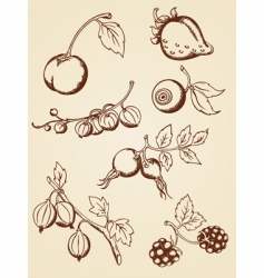 Hand drawn vintage berries vector