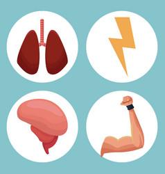 Set organs human healthy image vector