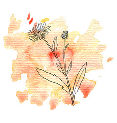 Flower of calendula at watercolor background vector