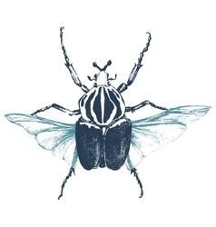 Hand drawn goliath beetle vector