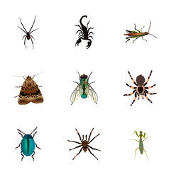 Realistic housefly poisonous arachnid and other vector