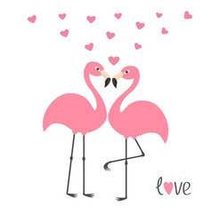 Pink flamingo couple and hearts word love exotic vector
