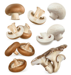 Edible mushrooms shiitake oyster cremini white vector
