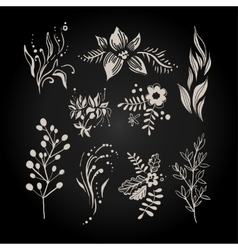 Fantasy hand drawn berry flower and plant set vector