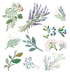 Herbs and plants for herbal medicine vector