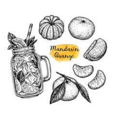 ink sketch of tangerines vector image