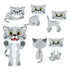 Cartoon grey kitten in different poses and mood vector