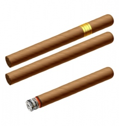 Cuban cigars vector