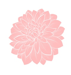 Dahlia flower isolated on white vector