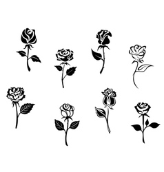 Rose flowers set vector image