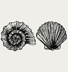 Sea snail and scallop shell vector