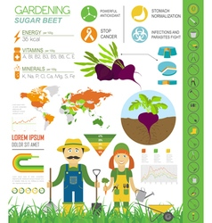 Gardening work farming infographic sugar beet vector