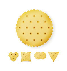 Cracker in different shapes yellow cookie vector